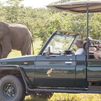 CSL - acrivities - game drive 2