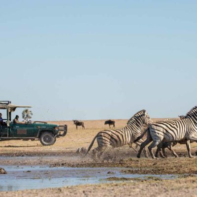 Game drives - Zebra