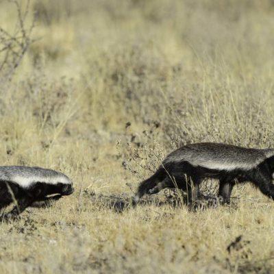 Kalahari_2012-06-105