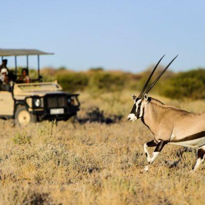 Kalahari_2012-06-65