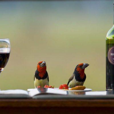 Kwando Lagoon birds