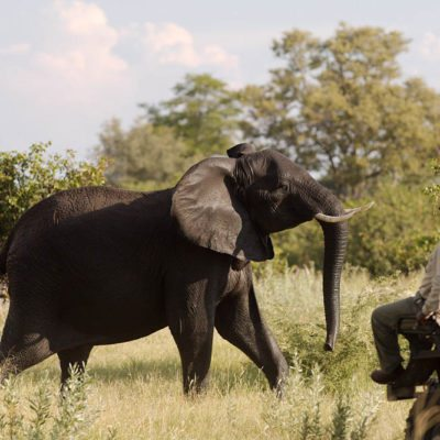Kwando Lebala tracker and elephant