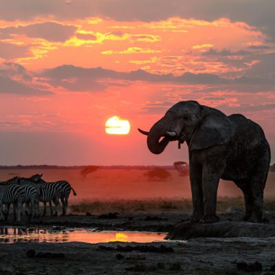 Kwando Nxai Pan elephant and zebra sunset