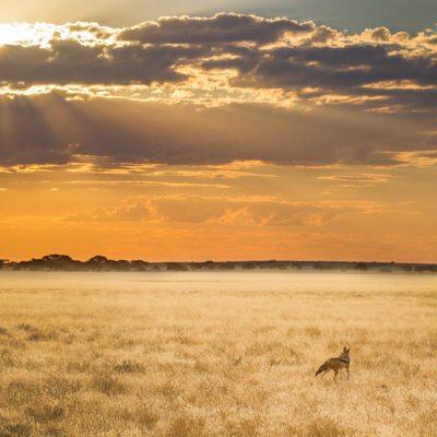 Kwando Tau Pan scenery with jackal