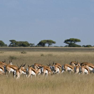 MM_Kalahariplains_Wildlife_09_56