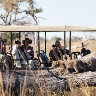 PP- activities - game drive