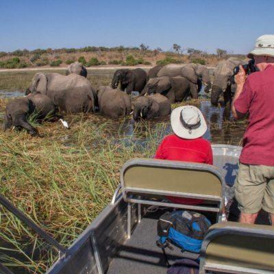 Close with Chobe Elephants