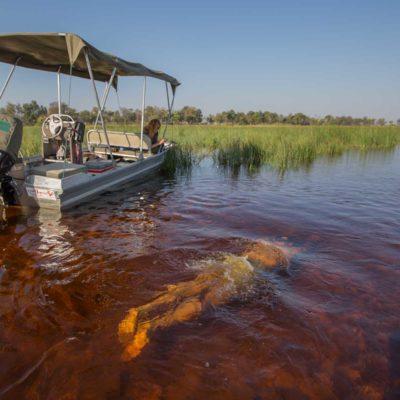 Swim with safari boat