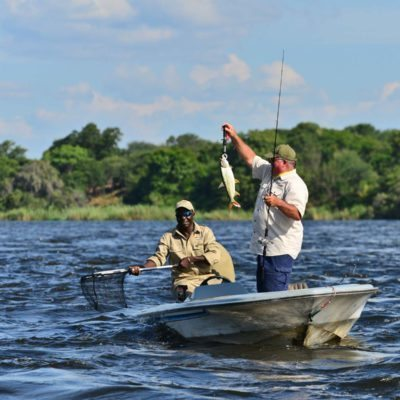ZQ Collection Tiger fishing Zambezi river runs