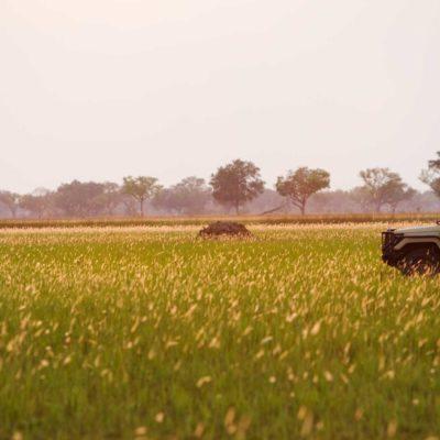 carplaingrass-shin-5711_hi-res