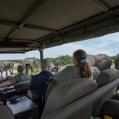 elephant view from car 2
