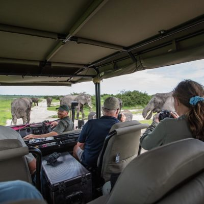 elephant view from car