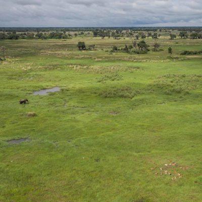helicopter Okavango