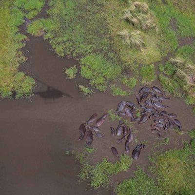 Okavango scenic