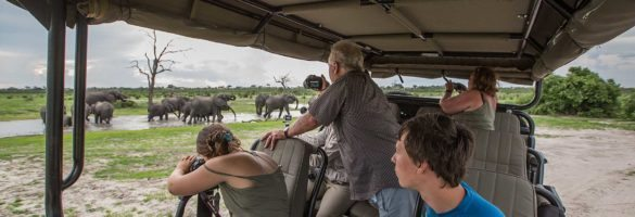 interior viewing elephants