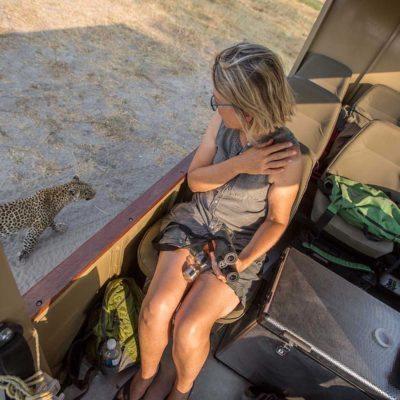 leopard-close-to-car