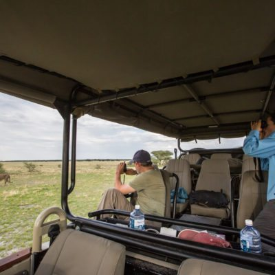 Kalahari lion safari