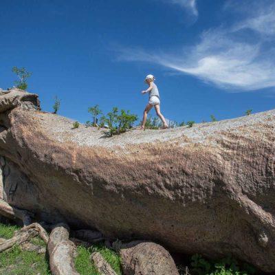 Chapmans Baobab