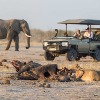 savuti game drive