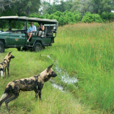 _Copyright_Andrew_Howard_Selinda_Safari_Botswana_4180