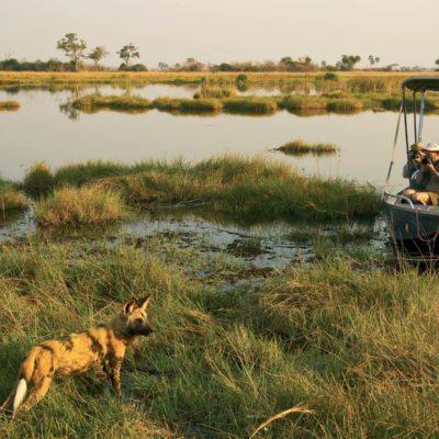 _Copyright_Beverly_Joubert_Selinda_Safari_Botswana_4177