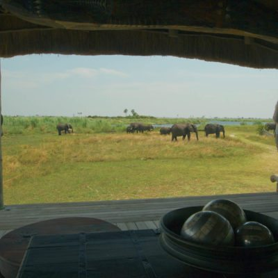 _Copyright_Beverly_Joubert_Selinda_Safari_Botswana_4179