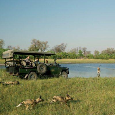 _Copyright_Beverly_Joubert_Selinda_Safari_Botswana_5006