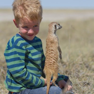botswana meerkats