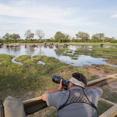 khwai eles river photo