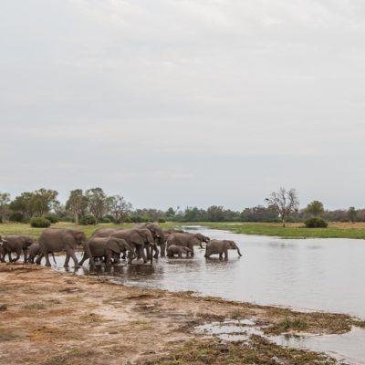 Khwai elepjhants