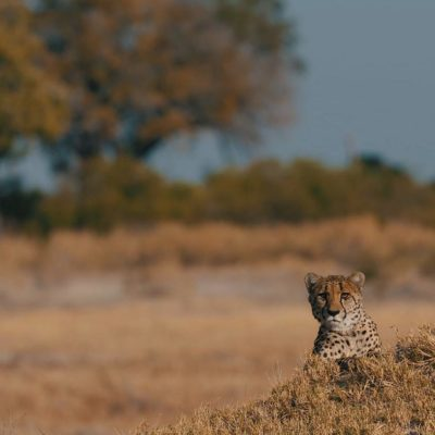 Africa; Botswana; Okavango Delta; Sanctuary Chief's Camp