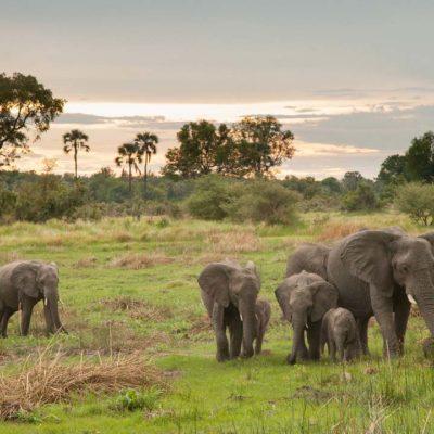 Chitabe_-_Elephants_2