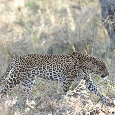 Chitabe_Wildlife_MM_2011_27