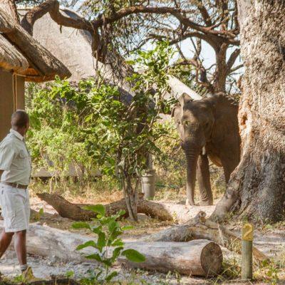 Kwando Lagoon camp visitor