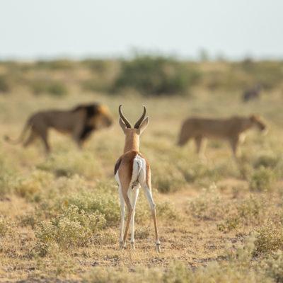 Kalahari hero