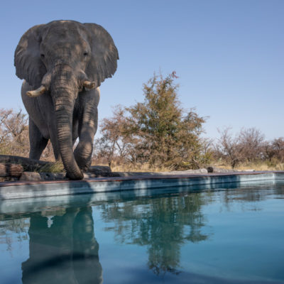 22Camp Kalahari - Ellie by the swimming pool